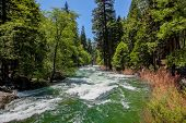 Raging Green Waters Of The Kings River In Kings Canyon National Park California poster
