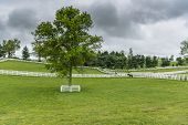 Protected Tree In Horse Paddock On Overcast Day poster