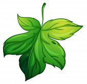 pic of chloroplast  - illustration of a green leaf on a white background - JPG