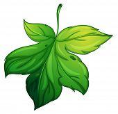 foto of chloroplast  - illustration of a green leaf on a white background - JPG