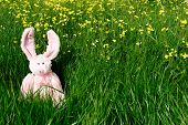 image of easter_break  - Pink Easter bunny on spring green grass - JPG