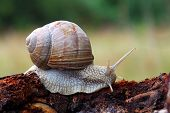 pic of crawling  - Snail in nature on the branch  - JPG