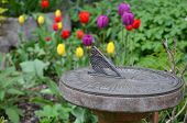foto of sundial  - Decorative old sundial in spring tulip garden - JPG