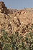 Oasis Chebika. Tunisia. Tourist Point. Tourism. Northern Sahara Desert.