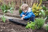 Little Boy Planting Seeds In Vegetable Garden