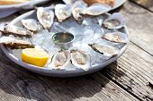 pic of oyster shell  - fresh raw oysters served with lemon and sauce at the plate with ice - JPG