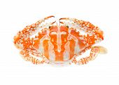 stock photo of blue crab  - Steamed Blue crab or Flower crab isolated on white background - JPG