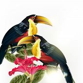 stock photo of toucan  - Illustration with  couple of toucan sit on branch isolated on white - JPG