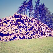 foto of afforestation  - The Logging in Southern Bavaria Photo Filter - JPG