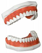 picture of dentures  - New medical Dentures isolated on a white background - JPG