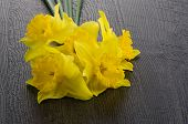 stock photo of jonquils  - Yellow jonquil flowers on dark wooden background - JPG