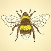 image of bumble bee  - Sketch bumble bee in vintage style vector background - JPG