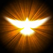 stock photo of pentecostal  - shining dove with rays on a dark golden background - JPG