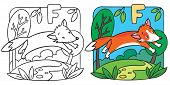 Постер, плакат: Little red fox coloring book Alphabet F