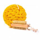 pic of bath sponge  - Synthetic bath sponge isolated on white closeup - JPG