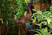 Tropical Parrots poster