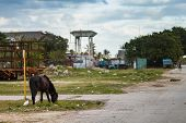 picture of horses eating  - Remedios Cuba - JPG