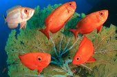 foto of shoal fish  - School Crescent - JPG