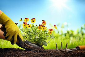 stock photo of spade  - Planting Flowers in a garden - JPG