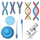 picture of human egg  - Set of biology objects - JPG