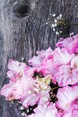 picture of gladiolus  - branch of pink gladiolus on wooden table - JPG