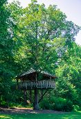 foto of tree house  - tree house built around the trunk of a very tall old tree - JPG