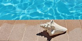 picture of conch  - Poolside holiday vacation scenic swimming pool summer conch shell - JPG