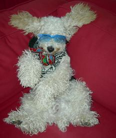 image of cockapoo  - a stylish cockapoo with sunglasses and a sweater posing for the camera - JPG
