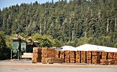 foto of 2x4  - Boards stacked in yard of mountain lumber mill - JPG