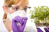 female scientist in goggles, gloves and mask looking carefully at plant sample, laboratory shoot, is