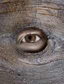 stock photo of peeping tom  - Person - JPG