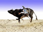 image of bucking bronco  - A bull rider about to hit the dust - JPG