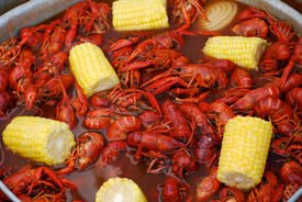 foto of crawdads  - Crawfish from a Louisiana Cookout - JPG