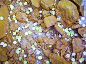 stock photo of colorado high country  - Sprinkle of aspen leaves float in mountain stream - JPG