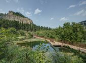 stock photo of spearfishing  - Black Hills in South Dakota in the Summer - JPG