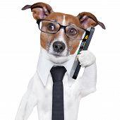 Постер, плакат: Смартфон собака