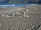 Driftwood Beach Sculpture