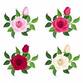 Set of four colored roses. Vector illustration.
