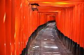 stock photo of inari  - The Fushimi - JPG