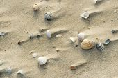 Shells at windy beach in the sand