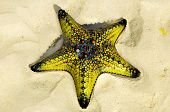 stock photo of echinoderms  - Zanzibar - JPG