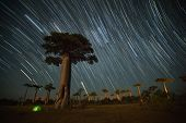 stock photo of baobab  - Baobab and night sky with star trails - JPG