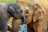 stock photo of mother baby nature  - cuddling elephant and baby elephant in the river - JPG