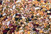 stock photo of mixture  - mixture of various raw legumes and spelt - JPG