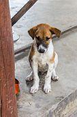 foto of stray dog  - Thai Stray Puppy Dog  - JPG