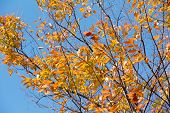 image of alder-tree  - close up image of Autumn alder trees background - JPG