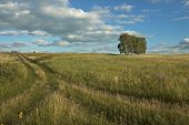 Summer landscape with field, road, trees, sky, clouds poster