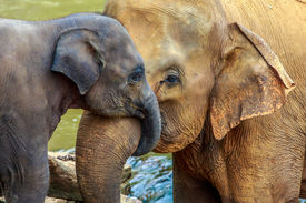 foto of cuddle  - cuddling elephant and baby elephant in the river - JPG