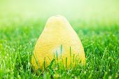 pic of pomelo  - fresh pomelo laying on a green grass - JPG