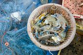 pic of blue crab  - Raw blue crab in the orange basket - JPG